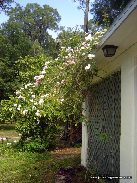 garage rose side
