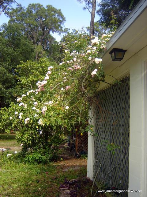garage rose side