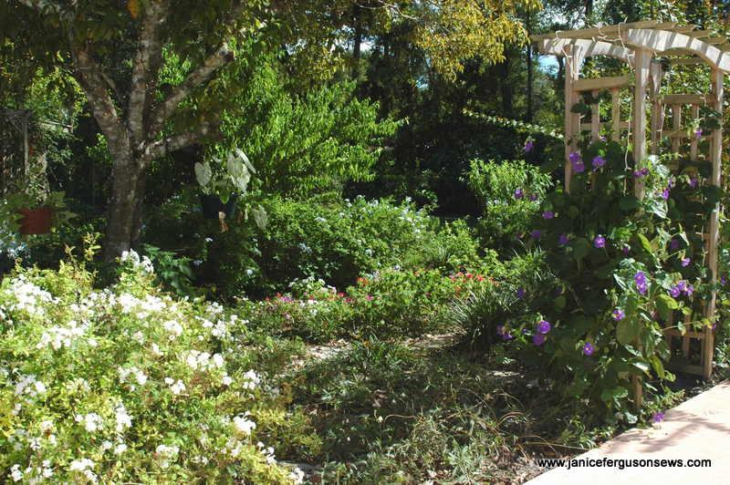 garden xx