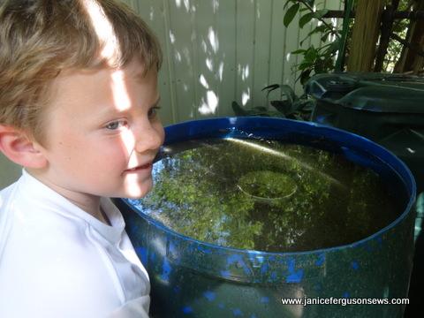 a-tadpole-tankxx